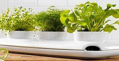 jardiniere-design-pour-plante-aromatique-dans-cuisine-Fancy – Décoration Maison et Idées déco Peinture par Pièce