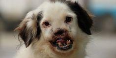 Addio Grivita! Morta la cagnetta che venne mutilata del muso in Romania