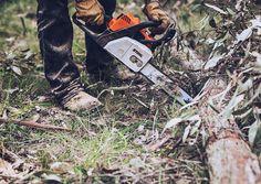 Cutting Firewood.