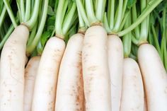 Health Benefits of white Radish also known as Daikon by Organic Facts