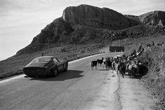 Phil Hill avoiding a herd of goats in a Ferrari 250 GTO at Targa Florio, 1962.