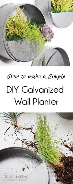 Wall Planter How to Make Simple DIY Galvanized Wall Planters - The Hip HomesteadHow to Make Simple DIY Galvanized Wall Planters - The Hip Homestead Galvanized Wall Planter, Succulent Wall Planter, Metal Wall Planters, Diy Hanging Planter, Decorative Planters, Diy Planters, Outdoor Wall Planters, Concrete Planters, Galvanized Metal