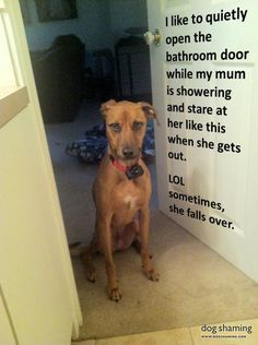 """Leo-the-Creep ... """"Leo likes to quietly open the door while I'm showering and stare at me like this when I get out. I have fallen over many a time – SUCH weird facial expressions on this dog. I'm convinced he's a person."""""""