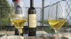 #Winetasting #Degustazione #Vino in terrazza @BarbaricciaRestaurant #Vinobianco #tagliere della #tradizione #KM0 #magicemotions a @CastleOfAngels