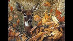Joy Of Life, Goats, Moose Art, Autumn, Youtube, Animals, Animales, Fall Season, Animaux