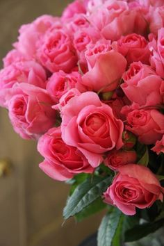 My favorite flowers♡♡♡ My Flower, Pretty Flowers, Pink Flowers, Bloom, Rosa Rose, Coming Up Roses, Mothers Day Flowers, Rose Bouquet, Beautiful Roses