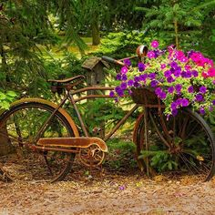 Rusted old bicycle turned wonderful planter