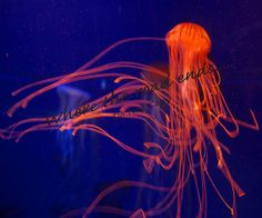 Jellyfish by WhereTheRoadEnds on Etsy