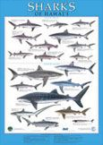 Sharks of Hawaii Poster