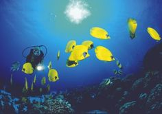 From Red Sea wreck diving to photographing fish off Bonaire, there's a vast array of dives on offer around the world.