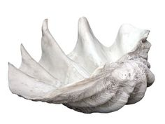 Oversized Shell  Put it in a fireplace, or on a table outdoors this Labor Day!  Coastal Decor Gone Urban