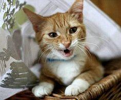 The Cat's Meow: Understanding Your Feline Friend