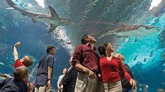 Newport Aquarium (Newport, KY) : Best Aquariums in the US : TravelChannel.com