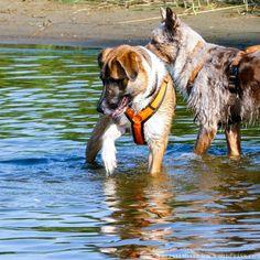 Enki liebt das Wasser. Aber das war nicht immer so. Erst Luna konnte ihm die Sicherheit geben, das kühle Nass zu genießen.