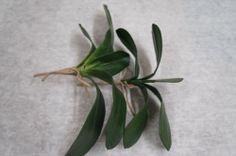 Silk Phalaepnosis Orchid Leaves - http://yourflowers.us/?p=13738