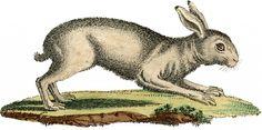 Vintage White Rabbit Image! - The Graphics Fairy