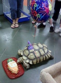 Tortoise Birthday Celebration. Love this