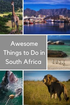 Awesome Things to Do in South Africa | A round up of the best things to do in South Africa for when you plan your vacation.  If you follow this itinerary, you won't need to go anywhere else in South Africa. From safaris to caves, marine life to scenery, this trip has it all! | The Planet D Adventure Travel Blog