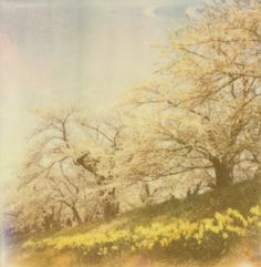 yasushi : 2011.05.09