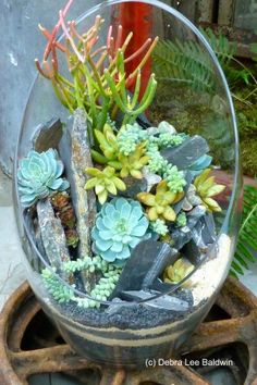 It's a day to garden inside! Wouldn't it be fun to create a beautiful succulent terrarium?
