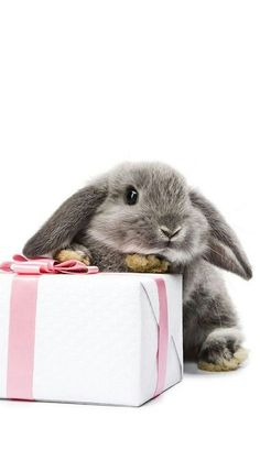 I'll just take the cut little bunny. And leave the present !!!!!
