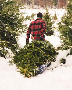 Christmas Tree Farm Winter Snow Snowstorm by ShadetreePhotography