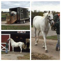 Seeing posted on Facebook - Old Friend's page - that Alphabet Soup arrived to the farm today! Nice picture of him being led from the van. Gosh, my heart still flutters looking at that grand stallion.