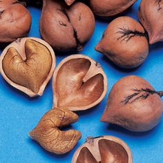 Heartnut — Also known as the Japanese Walnut. Produces clusters of easy-to-shell, heart-shaped, sweet and meaty nuts high in protein. Zones 5-8. Plant two or more for pollination and nut production.