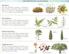 Claificación de las plantas