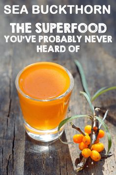 Are looking for a berry that has 9x the Vitamin C of comparable fruit? Huge amounts of antioxidants and even healthy fats? One that can replace meat? Try Sea Buckthorn and improve your health today!  http://foodal.com/knowledge/paleo/sea-buckthorn/