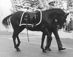 "At President John Fitzgerald Kennedy's funeral - Jacqueline Kennedy with her keen eye to history and Abraham Lincoln's funeral insisted on the riderless horse, a Morgan/Quarter Horse cross named ""Black Jack."" The boots are reversed in the stirrups to represent a fallen leader looking back on his troops for the last time."