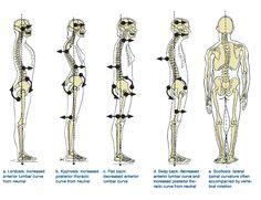 Posture & Balance - Es ch3