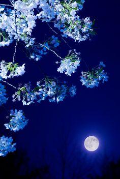 moonlight and summer garden