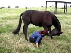 Pinned for Jay, his secret desire to trick his horse instead of his truck!....How to bow - Horse Trick Training -