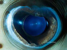 14 Extremely Detailed Close-Ups of Animal Eyes «TwistedSifter