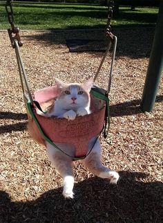 Жили-были кошки