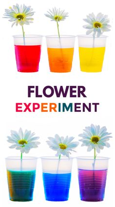 Learn about plants and how they thrive with the color changing flower experiment for kids! This flower rainbow is made using food coloring and makes a great science fair project for elementary! fair projects Flower Experiment for Kids Cool Science Fair Projects, Science Experiments For Preschoolers, Preschool Science Activities, Science Crafts, Cool Science Experiments, Science Classroom, Science For Kids, Science Ideas, Science Education
