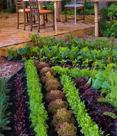Small Garden Inspiration- Tips for Growing A Small Garden