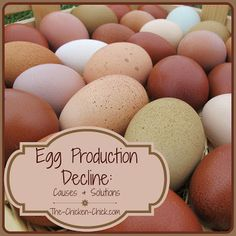 Decrease in Egg Production: Causes