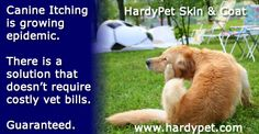 Veterinarians across the country are reporting a dramatic increase in canine itching and skin issues related to food allergies, environmental conditions, yeast overgrowth and more. Thankfully, HardyPet Skin & Coat is formulated to address these issues and provide quick and lasting relief. If you know a dog suffering from itchy skin, tell their owner about HardyPet.
