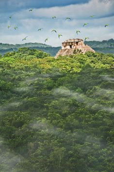 The Maya site of Xunantunich in Belize rises above the jungle and clouds as a flock of parakeets fly over in the early morning light.