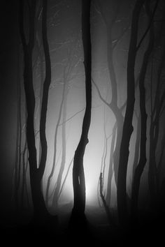 ~~Shot in the dark ~ misty foggy night, Stanmer Park, Brighton by Finn Hopson~~ White Photography, Landscape Photography, Nature Photography, Shot In The Dark, All Nature, Tree Forest, Dark Wood, Belle Photo, Enchanted