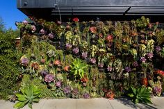 This California House Has a Vertical, Living Succulent Wall — Outdoor Tour