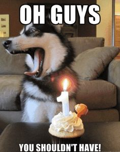 You Shouldn't Have - Funny Happy Birthday Meme Funny Shit, Funny Cute, Funny Memes, Funny Happy, Funny Stuff, Pet Memes, Funny Comedy, I Love Dogs, Puppy Love