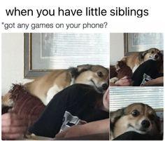 dog, posts, and tumbler resmi