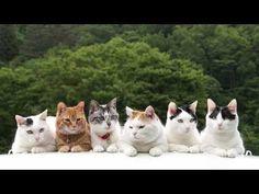 Six cats 2015 #Cutecat #Video