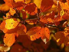 Ősz, Erdő, Fa, Út, Levelek, Levél Növényen, Színes