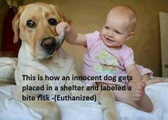 Why is it always the dog? Why not euthanise the real problem?