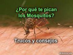 Recetas Caseras Fáciles MG: ¿Por qué te pican los mosquitos? Pest Control, Tips, Club, Easy, Homemade Recipe, Health Tips, Natural Remedies, Home Remedies, Bed Bugs Treatment