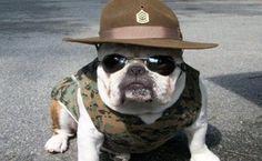 Gunny - Marine Corps, Marines, Recon, USMC